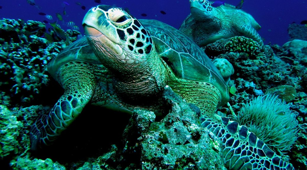 Philippine Fun Divers Turtle Balicasag Island