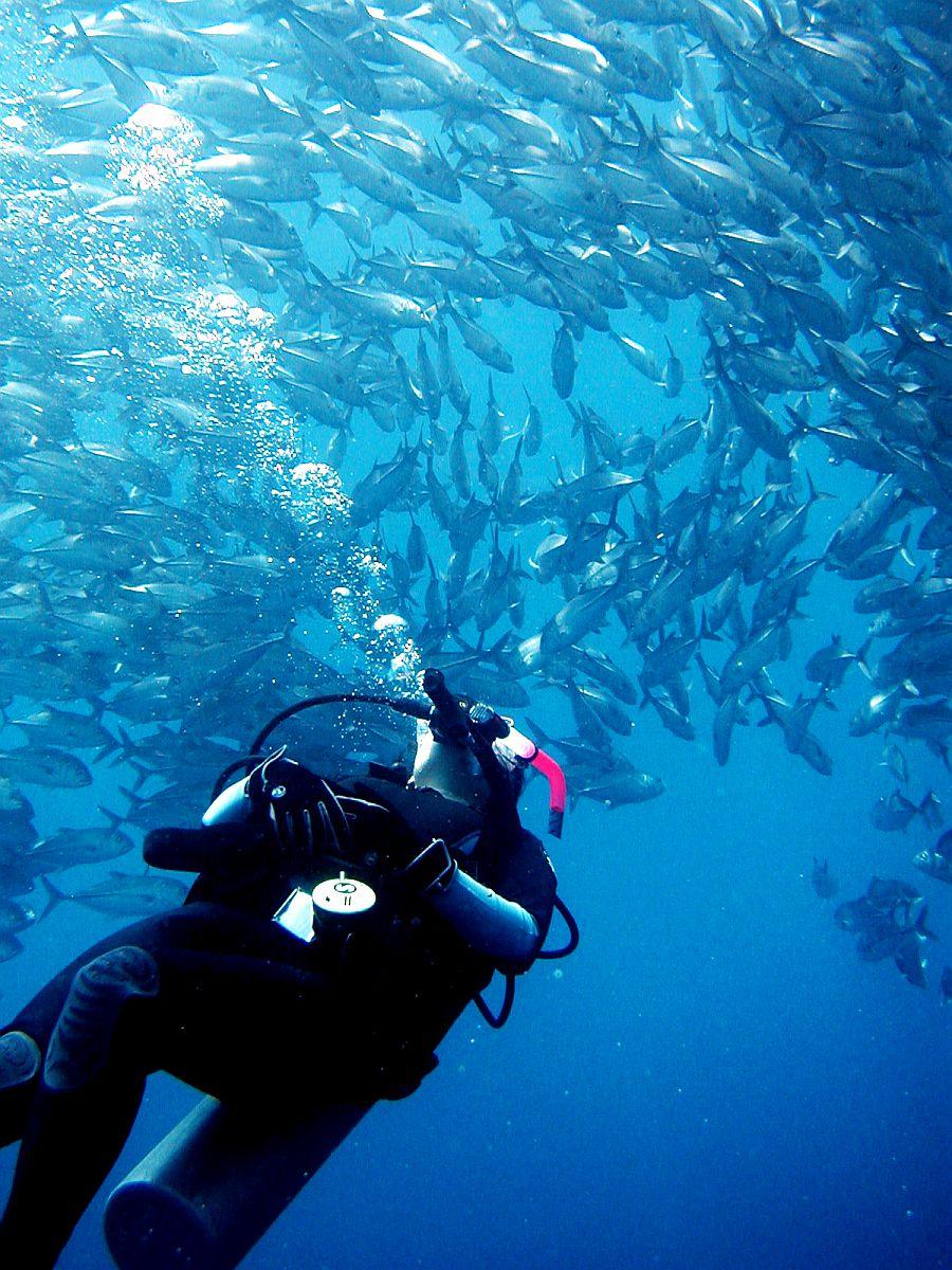 Philippine Fun Divers - Divers Alona Beach Panglao Bohol 12