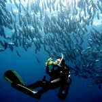 Philippine Fun Divers - Divers Alona Beach Panglao Bohol 13