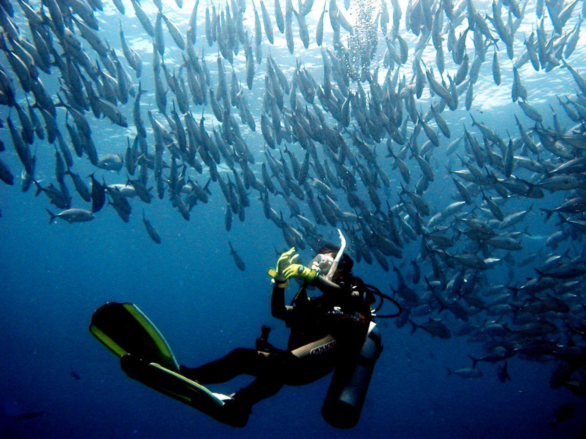 Philippine Fun Divers - Divers Alona Beach Panglao Bohol 13