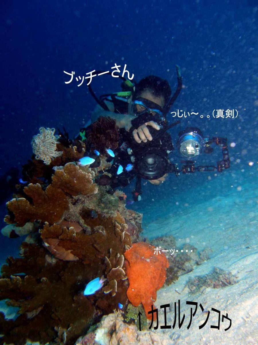 Philippine Fun Divers - Divers Alona Beach Panglao Bohol 7