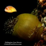 Philippine Fun Divers Alona Beach Panglao Bohol under water creatures