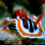 Philippine Fun Divers Alona Beach Panglao Bohol under water creatures