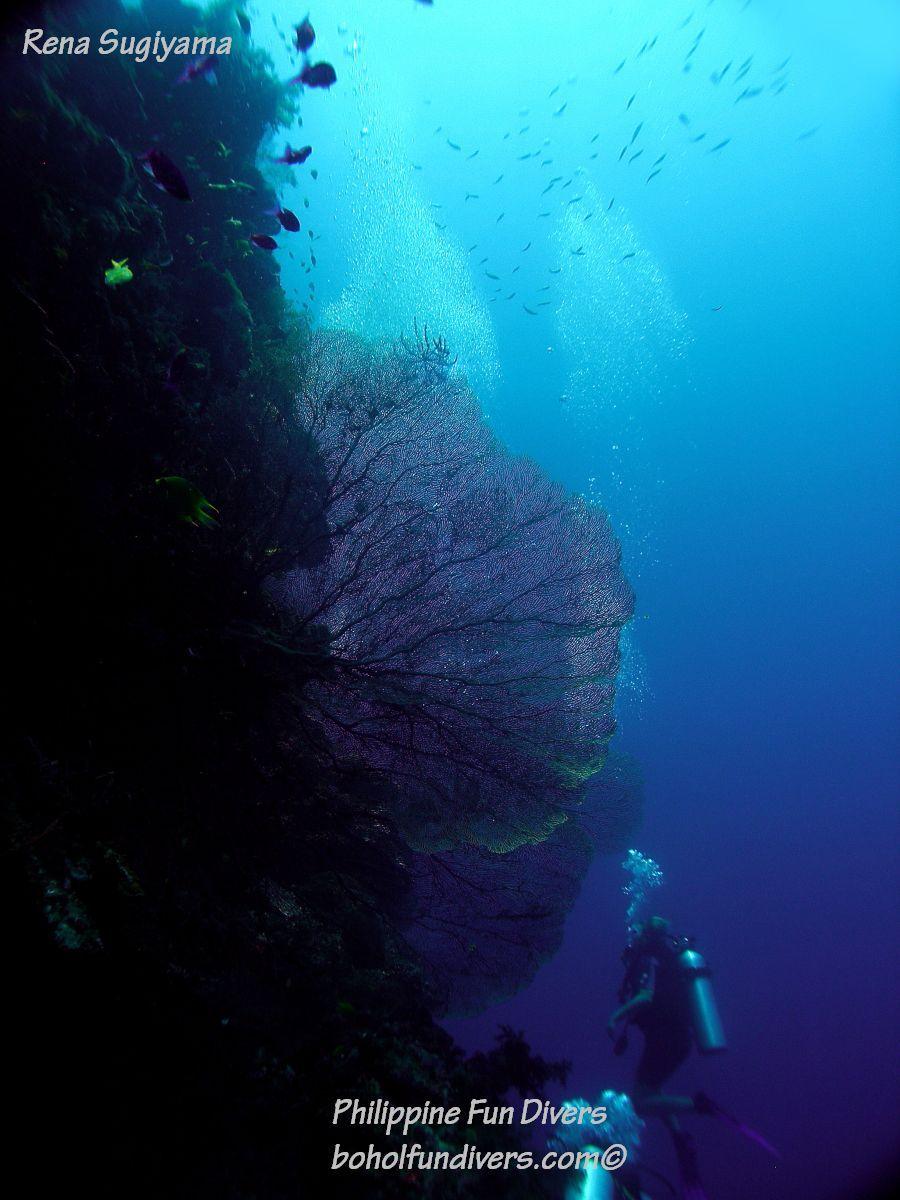 Philippine Fun Divers Alona Beach Panglao Bohol Reef scene 11