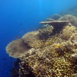 Philippine Fun Divers Alona Beach Panglao Bohol Reef scene 2