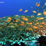 Philippine Fun Divers Alona Beach Panglao Bohol Reef scene 5